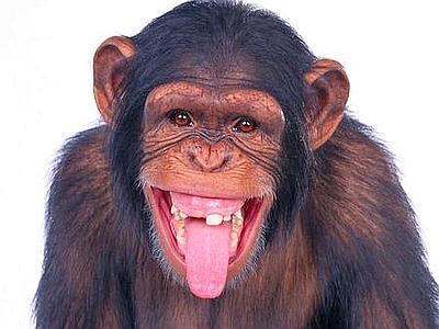 scimmia_linguaccia_web-400x300