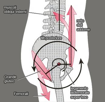 Carichi colonna vertebrale